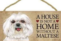 Maltese Dog Lover / Everything you love about the Maltese!
