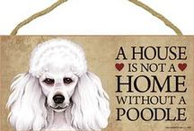Poodle Dog Lover / Everything you love about the Poodle!