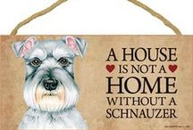 Schnauzer Dog Lover / Everything you love about the Schnauzer!