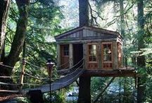 | Dream Treehouse |
