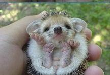 Cuties / hedgehog, pugs, owls, babies / by Sirja Ellen