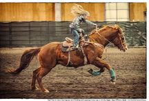 Horses / by Christine Bozik