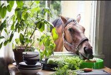 Home On The Range / Nature & beautiful photos. / by Cat Aldridge