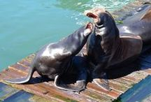 Sea Lions of Newport, Oregon / by North Coast Brewing Company