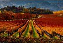 California Wine Country / Best of California wine country: best and off-the-beaten path California wineries