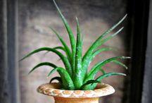 Air plants <3 & succulents / by Amélie C-F
