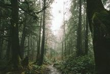 into the wild / by Casee Marie