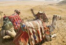 Desert - Sahara & Arabian