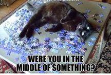 __Cats / A Pin Board dedicated to my sweet kitties Jack, Captain&Merlot :) -JJ