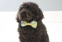 Gifts for Pets & Pet Lovers / by notonthehighstreet.com