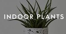 Indoor Plants / If you are a botanicals lover, we've got some great news for you - this trend is going nowhere anytime soon. So if you are just discovering the botanical trend, don't worry, we've got some great options for you to add some greenery to your life.   From unique planters and pots that make thoughtful home decor gifts to botanical drawings and art prints that will liven up any wall in your home.