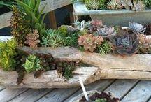Gardening - Flowers & Food / Gardening tips