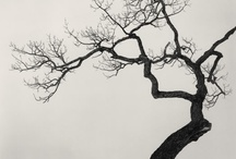Trees / by Desiree Oldman Pelser