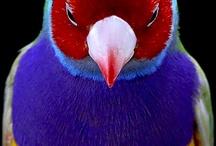 colori e natura / spettacolari colori