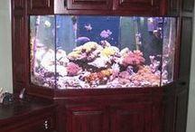 Fish Tanks / by Terri Bailey