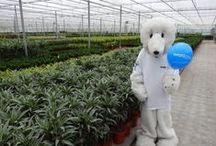 Kom in de kas 2014 / Kom in de kas 2014, op de foto met de ijsbeer van Wattco