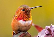 Birds <3 / Birds