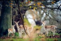 W I L D * A N I M A L S / WILD ANIMALS  / by Almara Shop