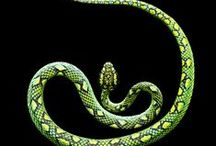 Reptiles--Snakes / by Bonnie Koenig