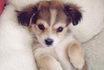 D O G S / DOG CUTIES, PUPPIES / by Almara Shop