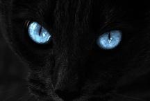 Le Chat Noir / by Bonnie Koenig