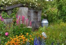 Allotment and garden ideas