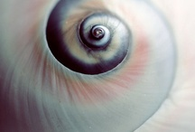 Shell Shocked / by Bonnie Koenig