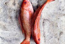 Seafood & Fish - Pescado & Marisco
