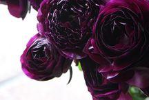 violet + / purper | pourpre | pourpre | πορφυρός | viola | roxo | púrpura / by Claudy Berry
