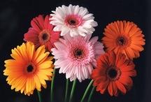 flowers/garden / by Heidi Appis