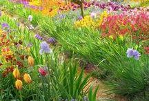 Jardinería / Jardinería, flores etc...