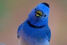 Birds Dressed In Blue Or Green / by Cheryl Krauss