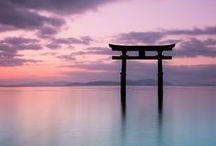 I love Japan / by Akire San