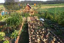 El huerto de Beni en Casas Rurales Pradina / El huerto ecológico de Casas Rurales Pradina, fruto del trabajo y el cariño de Beni.