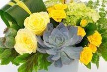 Summer Beauties / Summer Flowers are in full bloom at Pugh's Flowers.  http://www.pughs.com/summer-flowers/