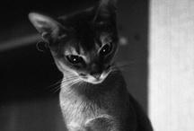 BELOVED ANIMALS / by GretaCalla