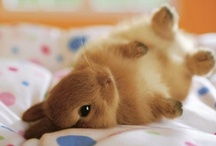 I want a bunny!! / by Emily Tol