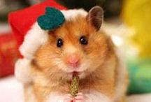 Christmas and Winter Pets / Photos of adorable pets dressed for the season, winter fun and information, DIY projects, awesome gift ideas and more!