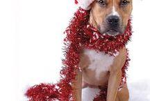 Christmas / by Carolyn Carr