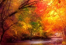 Colors of Fall / Love the change of seasons! / by Kathy Kelly