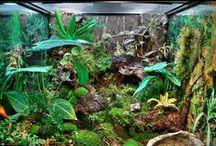 Aquarium et Terrarium - Acuarios y Terrarios