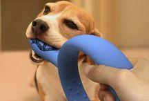 z dog supplies