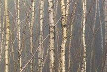 all tree foto inspiration