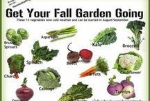 Gardening Fun / Love to Garden? Check out and share out gardening tips / by Kelowna BC