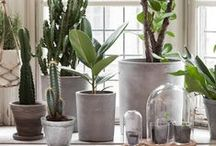 PLANTS <3 URBAN JUNGLE STYLE / Ideas for hanging planters, macramé, terracotta or other inspiring ideas, urban jungle,