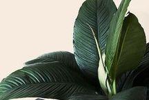 Decor |  Plants + Flowers / decor, plants, interior design, greenery, garderning, planters, home decor