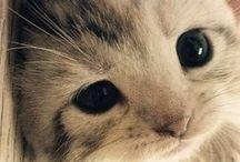 Kitties! / Cause what's cuter than kitties?