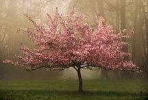 Dream Garden / Zahrada snů / Мечтаната градина / by Ivaalex
