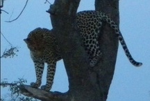 Travel: Out of Africa, on Safari