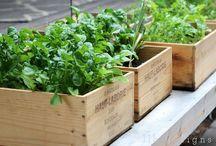 Gardening and Going Green / by Erin Hamada-Bigelow